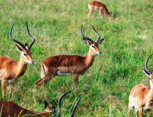 02 Days Tarangire National Park