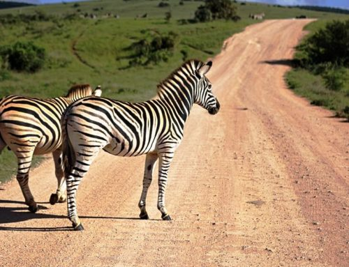 3 Days Masai Mara Budget Safaris