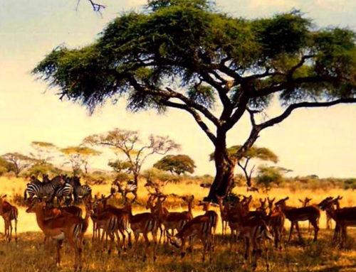 5 Days Tanzania Safaris