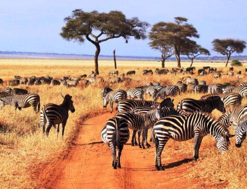 3 Day Tanzania Tour