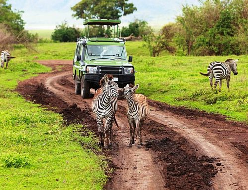 3 Days Tsavo West Road Package
