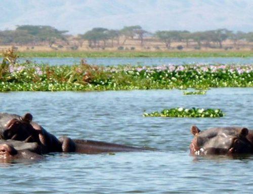 Visit to Lake Naivasha